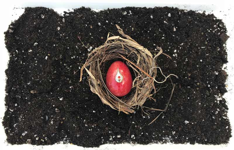 red egg in a nest